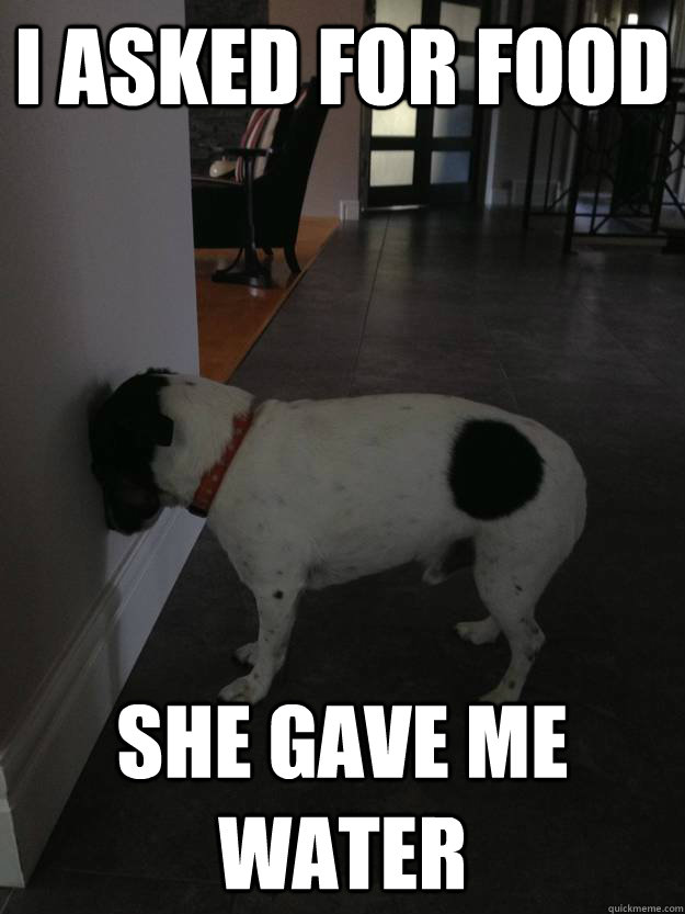 I asked for food She gave me water - I asked for food She gave me water  Annoyed Dog