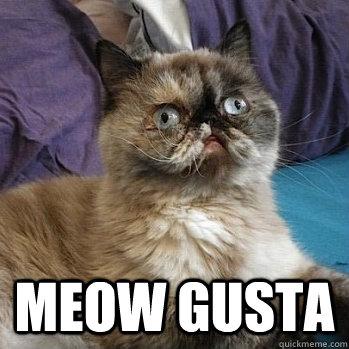 98af7bb09f37bc48cba841a906e74bbc07125290e21ce4b28f3f4f6ec09643f8 meow gusta memes quickmeme,Meow Meme