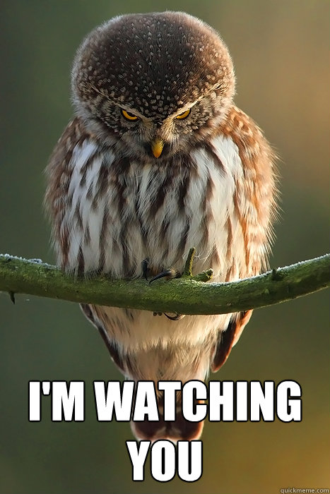 I'm Watching You -  I'm Watching You  Stalker Owl