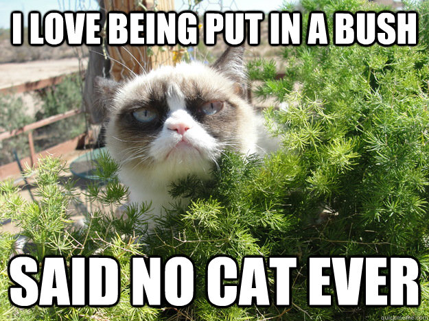 I love being put in a bush Said no cat ever - I love being put in a bush Said no cat ever  Grumpy Cat Bush