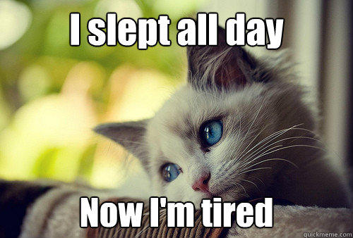 Funny I M Sleepy Meme : I slept all day now m tired first world problems cat