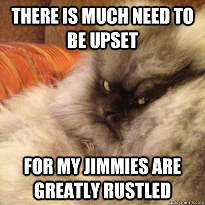 There is much need to be upset For My jimmies are greatly rustled - There is much need to be upset For My jimmies are greatly rustled  Angriest Cat