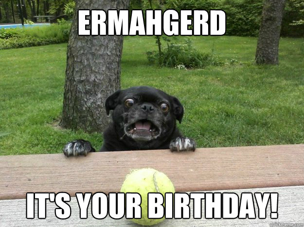 Ermahgerd It's Your Birthday! - Ermahgerd It's Your Birthday!  Berks Dog