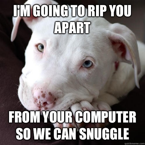 I'm going to rip you apart from your computer so we can snuggle - I'm going to rip you apart from your computer so we can snuggle  Misunderstood Pit Bull