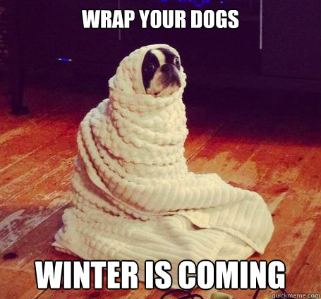 wrap your dogs Winter is coming - wrap your dogs Winter is coming  wrap your dogs