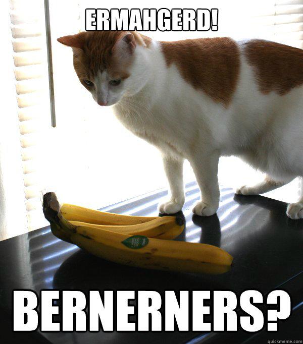 The gallery for --> Ermahgerd Animal Memes