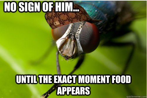 No sign of him... until the exact moment food appears - No sign of him... until the exact moment food appears  Scumbag Fly