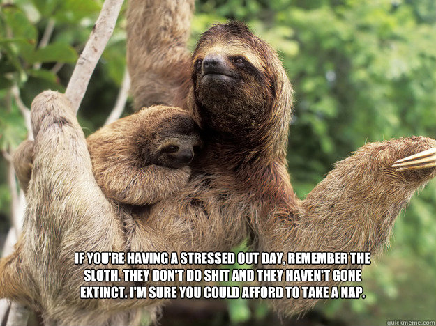 If you're having a stressed out day, remember the sloth. They don't do shit and they haven't gone extinct. I'm sure you could afford to take a nap.  Stress