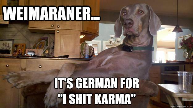 Weimaraner    It's German for