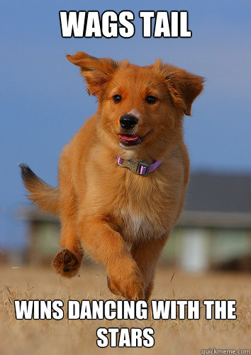 wags tail wins dancing with the stars - wags tail wins dancing with the stars  Ridiculously Photogenic Puppy