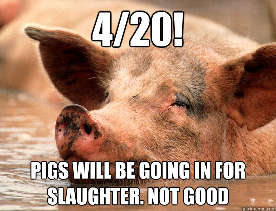 4/20! Pigs will be going in for slaughter. Not good  Stoner Pig