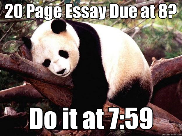 procrastination panda memes quickmeme 20 page essay due at 8 do it at 7 59