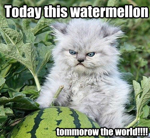 Today this watermellon  tommorow the world!!!!  German Kitty