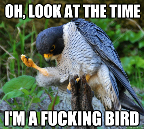 Oh, look at the time I'm a fucking bird