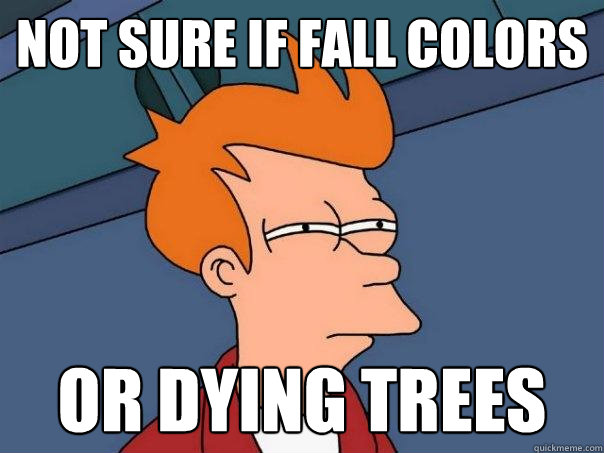 Not sure if fall colors  or dying trees - Not sure if fall colors  or dying trees  Futurama Fry