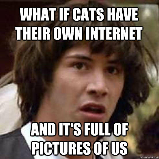 What if cats have their own internet And it's full of pictures of us - What if cats have their own internet And it's full of pictures of us  conspiracy keanu