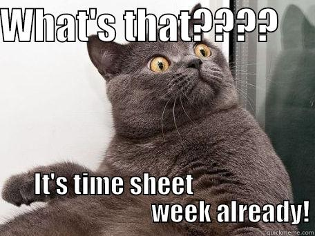 WHAT'S THAT????      IT'S TIME SHEET                                                 WEEK ALREADY! conspiracy cat