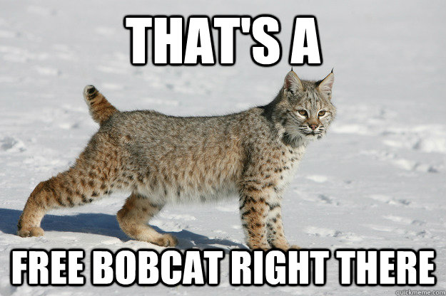 That's a  Free Bobcat right there - That's a  Free Bobcat right there  Free bobcat