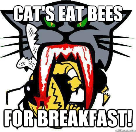Funny Arctic Cat Memes