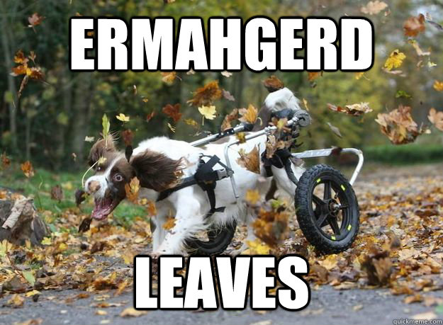 Ermahgerd leaves - Ermahgerd leaves  ERMAHGERD