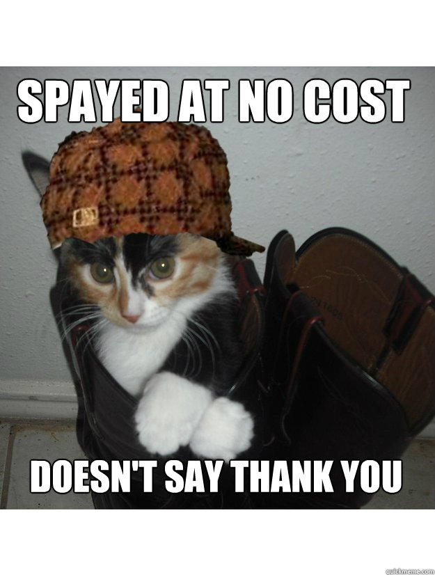 spayed at no cost doesn't say thank you