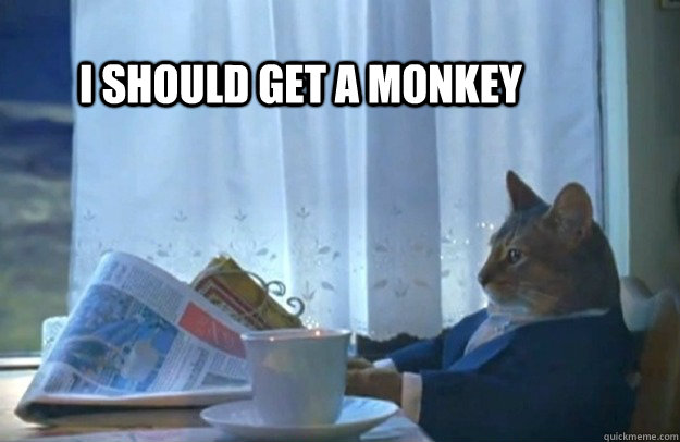 i should get a monkey - i should get a monkey  Sophisticated Cat