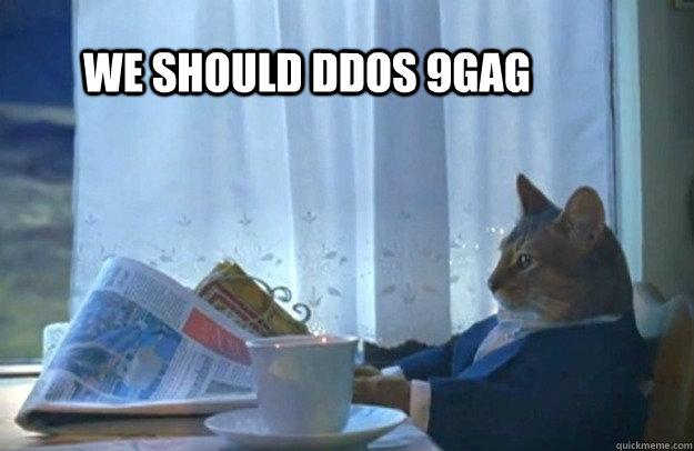 We should DDOS 9gag - We should DDOS 9gag  Sophisticated Cat