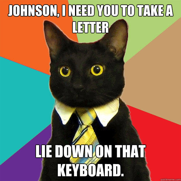 Johnson, I need you to take a letter lie down on that keyboard. - Johnson, I need you to take a letter lie down on that keyboard.  Business Cat