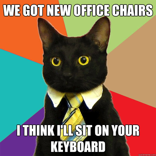We got new office chairs I think I'll sit on your keyboard - We got new office chairs I think I'll sit on your keyboard  Business Cat