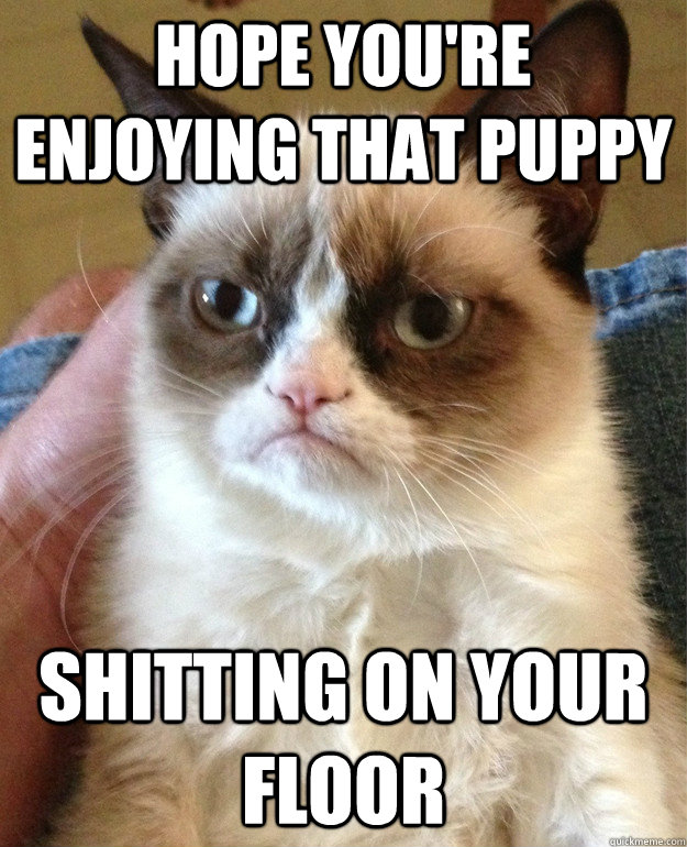 Hope you're enjoying that puppy shitting on your floor - Hope you're enjoying that puppy shitting on your floor  Grumpy Cat