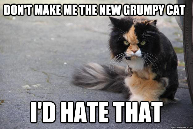 Don't make me the new grumpy cat I'd hate that - Don't make me the new grumpy cat I'd hate that  Angry Cat