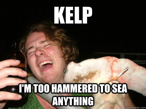 kelp i'm too hammered to sea anything - kelp i'm too hammered to sea anything  Hammered Hammer