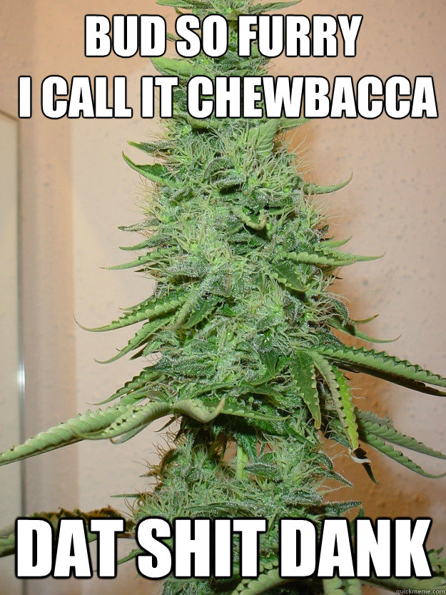 Bud so furry  I call it Chewbacca Dat shit dank  weed