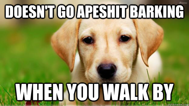 doesn't go apeshit barking when you walk by - doesn't go apeshit barking when you walk by  Misc