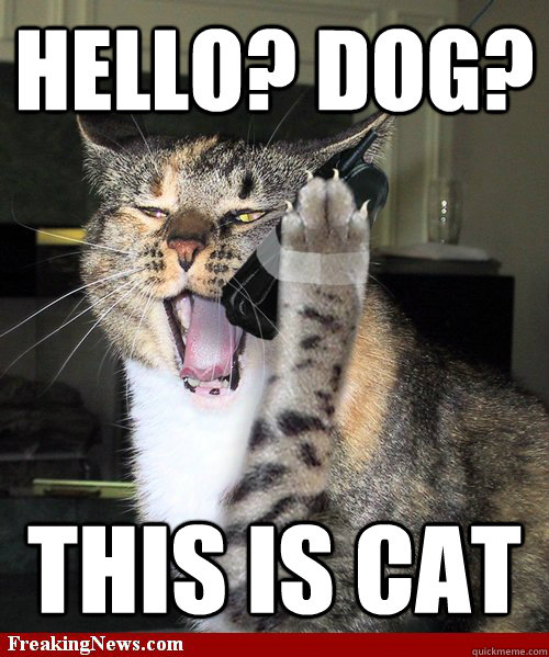 hello this is dog. hello? dog? this is cat hello this is dog