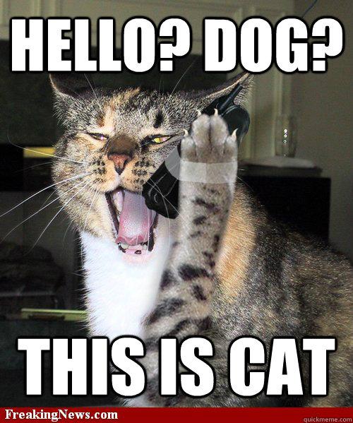 Hello Dog This Is Cat Cat Phone Quickmeme