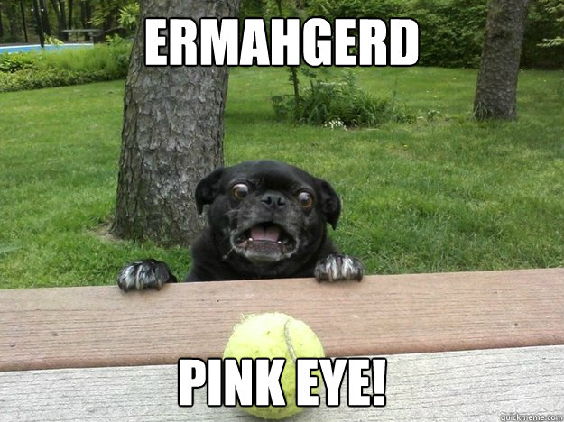 Ermahgerd Pink eye! - Berks Dog - quickmeme - photo#39