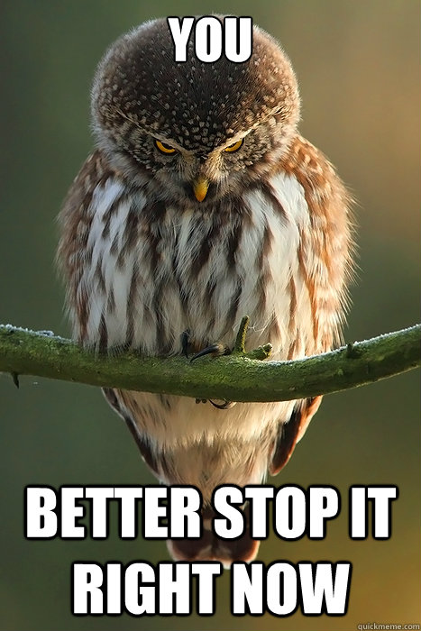 You Better stop it right now  Angry Owl