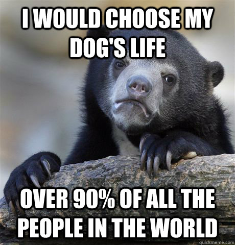I would choose my dog's life over 90% of all the people in the world - I would choose my dog's life over 90% of all the people in the world  Confession Bear