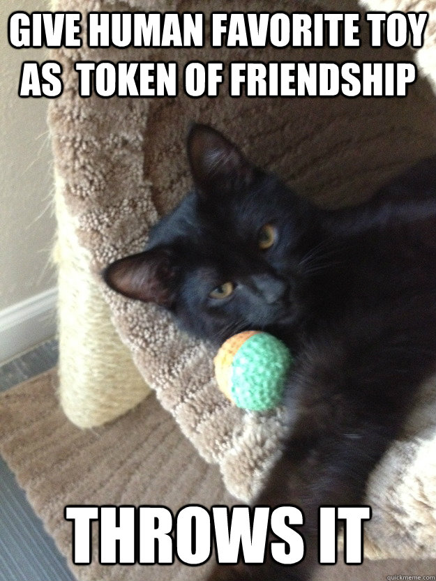 Give Human favorite toy as  token of friendship Throws it - Give Human favorite toy as  token of friendship Throws it  Misc