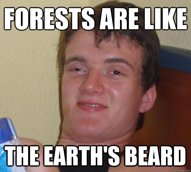 Forests are like  the Earth's beard - Forests are like  the Earth's beard  10 Guy