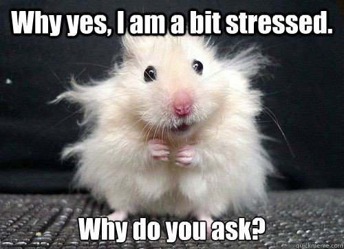 Why yes, I am a bit stressed. Why do you ask?  - Why yes, I am a bit stressed. Why do you ask?   mouse