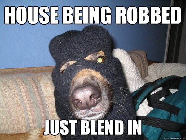 House being robbed Just blend in  Awful Guard Dog