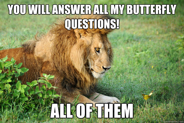 you will answer all my butterfly questions! all of them