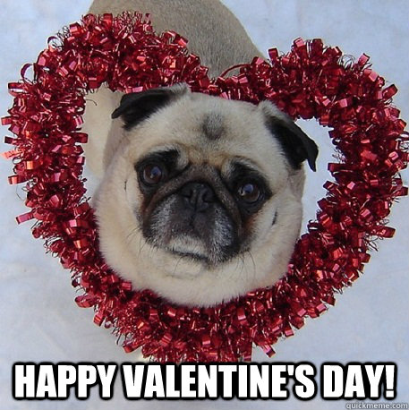 Happy Valentine's Day! -  Happy Valentine's Day!  Pug Valentine