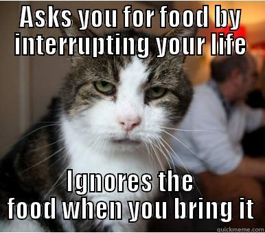 ASKS YOU FOR FOOD BY INTERRUPTING YOUR LIFE IGNORES THE FOOD WHEN YOU BRING IT Misc