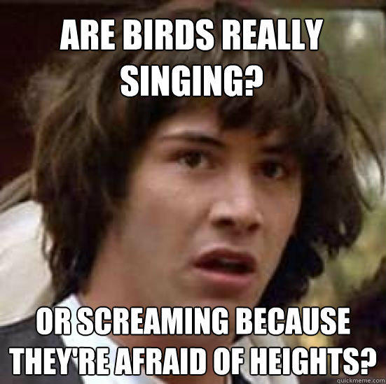 are birds really singing? or screaming because they're afraid of heights? - are birds really singing? or screaming because they're afraid of heights?  conspiracy keanu