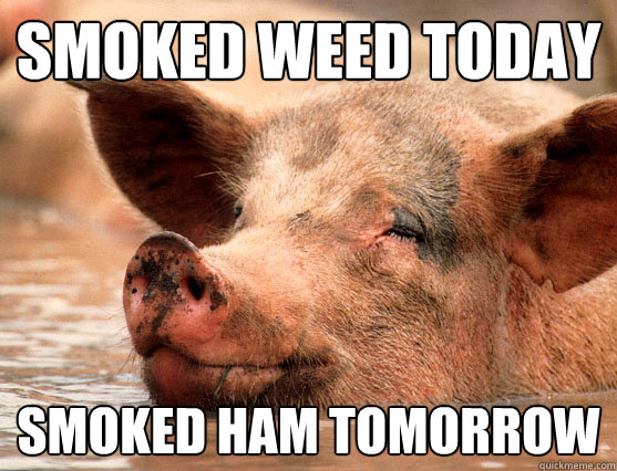 smoked weed today  smoked ham tomorrow  Stoner Pig