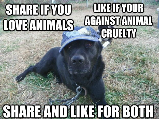 share if you love animals like if your against animal cruelty  share and like for both