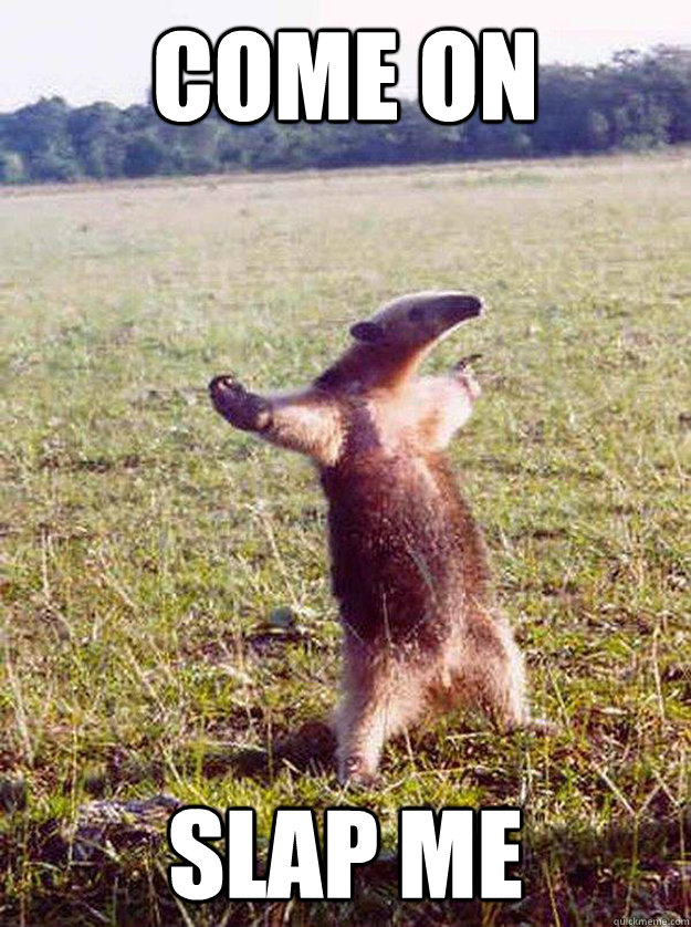 come on slap me - come on slap me  anteater bro